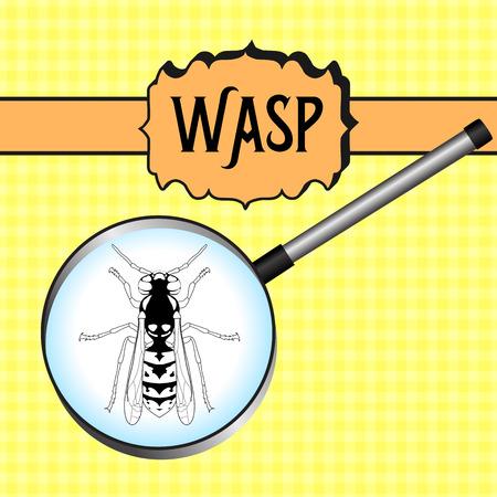 mosca: insectos en magnifier.Wasp. Bosquejo de la avispa. Dise�o de la avispa por libro para colorear. dibujados a mano de la avispa. ilustraci�n vectorial
