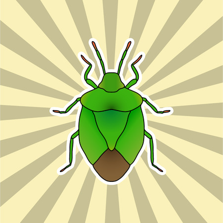 prasina: Insect sticker. shield bug. Palomena prasina. Sketch of shield bug.  shield bug Design for coloring book. hand-drawn shield bug. Vector illustration