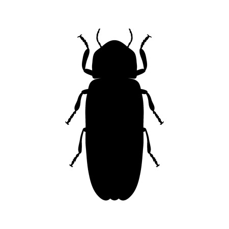 fireflies: Firefly beetle Lampyridae. Sketch of Firefly beetle. Firefly beetle isolated on white background. Firefly beetle Design for coloring book.  hand-drawn Firefly beetle. Vector illustration