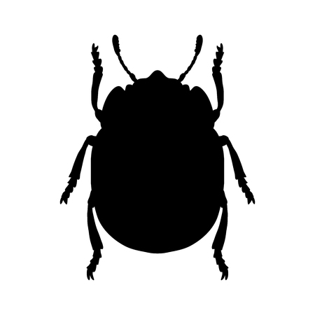 harm: colorado potato beetle. Leptinotarsa decemlineata. Sketch of colorado potato beetle.  colorado  beetle isolated. colorado  beetle Design for coloring book.  hand-drawn colorado  beetle. Vector Illustration