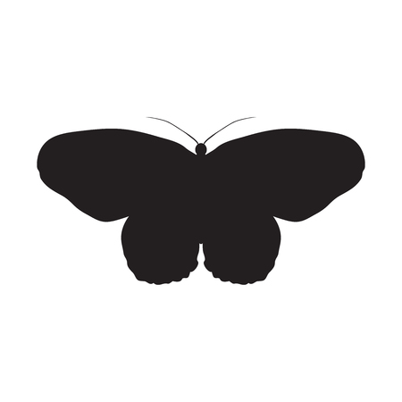 paper kite: Butterfly Idea Leuconoe. Paper Kite . Sketch of Butterfly. Butterfly isolated on white background. Butterfly Design for coloring book. hand-drawn Butterfly. Hand drawn Vector illustration Illustration