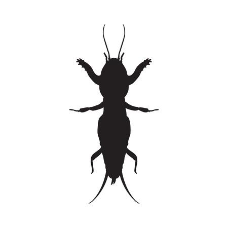 arthropoda: Gryllotalpidae.European mole cricket. gryllotalpa.Sketch of mole cricket  mole cricket isolated on white background.mole cricket Design for coloring book. hand-drawn outline mole cricket.Vector illustration