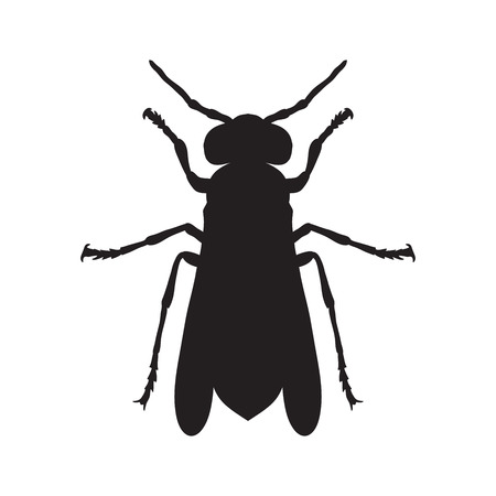 wasp: Wasp. Sketch of Wasp. Wasp isolated on white background. Wasp Design for coloring book.  hand-drawn Wasp. Vector illustration Illustration