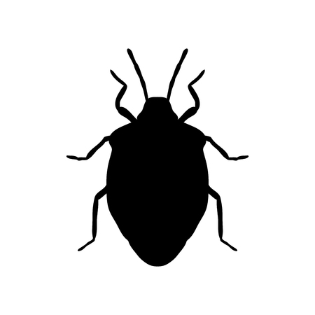 bugs: shield bug. Palomena prasina. Sketch of shield bug.  shield bug isolated on white background. shield bug Design for coloring book.  hand-drawn shield bug. Vector illustration