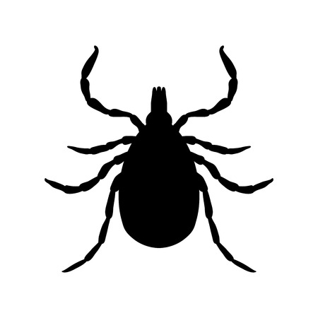 Tick parasite. Sketch of Tick. Mite. Tick isolated on white background. Tick Design for coloring book.  hand-drawn Tick. Vector illustration
