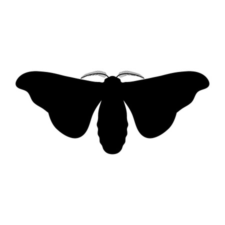 butterfly Bombyx mori.  Sketch of butterfly. butterfly isolated on white background. butterfly Design for coloring book.  hand-drawn butterfly. Vector illustration