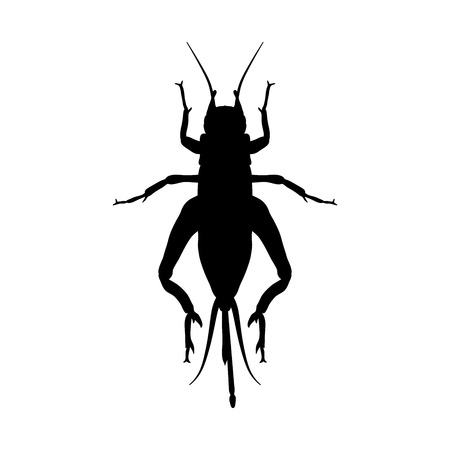 campestris: cricket. grig. Gryllus campestris. Sketch of cricket.  cricket isolated on white background. cricket Design for coloring book.  hand-drawn cricket. Vector illustration