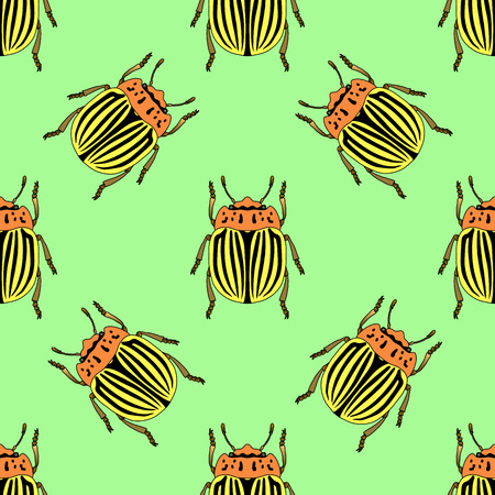 brindled: Seamless pattern with colorado potato beetle. Leptinotarsa decemlineata.   colorado beetle.  hand-drawn colorado beetle. Vector illustration Illustration