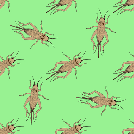hopper: Seamless pattern with cricket or grig. Gryllus campestris.    hand-drawn cricket. grig. . Vector illustration