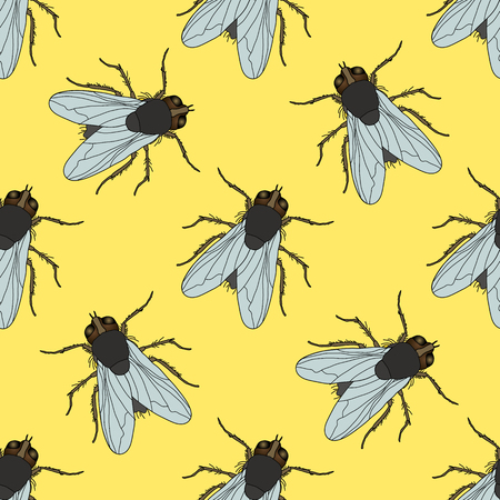 musca domestica: Seamless pattern with fly. Musca domestica . hand-drawn . fly. Vector illustration Illustration