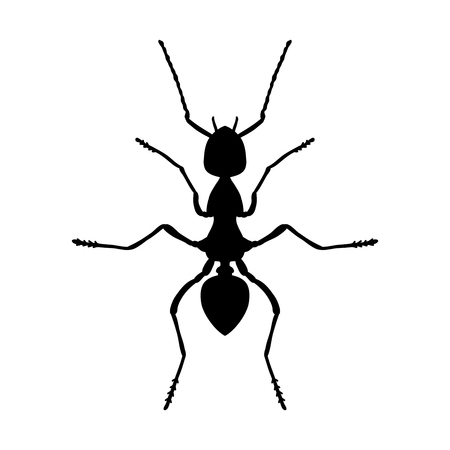 etymology: Insect anatomy. Silhouette Formica exsecta. Sketch of ant. Ant . hand-drawn silhouette ant. Vector illustration
