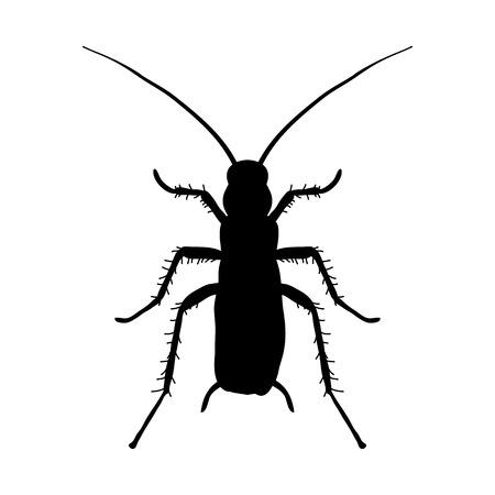 infestation: silhouette of cockroach. Blattella germanica. cockroach. Sketch of cockroach silhouette. Vector illustration