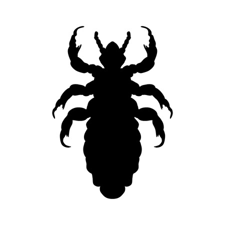 head: Silhouette of  head human louse. Pediculus humanus capitis. louse  silhouette isolated on white background. louse. Vector illustration