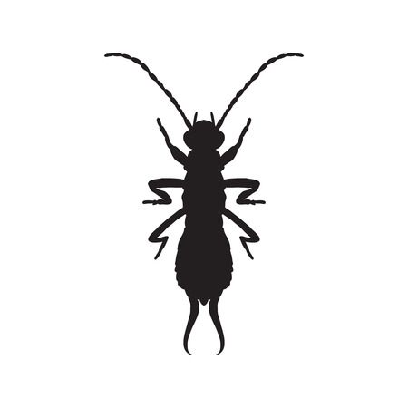 black wigs: silhouette Forficula auricularia. Earwig silhouette. Sketch of Earwig. Earwig silhouette isolated on white background.  hand-drawn  Earwig silhouette. Vector illustration Illustration