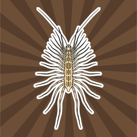arthropod: Insect anatomy. Sticker Scutigera coleoptrata. millipede.  House centipede Sketch of millipede.  millipede Design for coloring book. hand-drawn millipede. Vector illustration Illustration