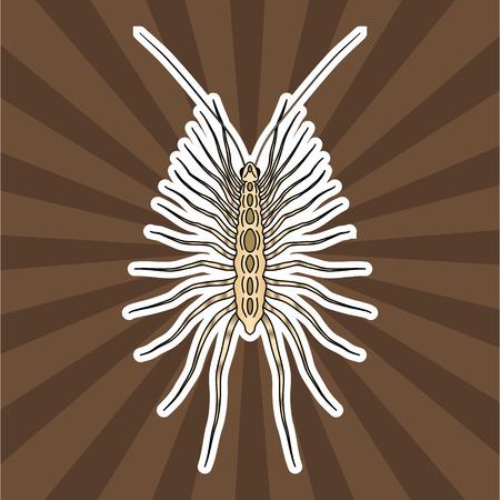 Insect anatomy. Sticker Scutigera coleoptrata. millipede. House centipede Sketch of millipede. millipede Design for coloring book. hand-drawn millipede. Vector illustration