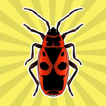 firebug: Insect anatomy. Sticker Pyrrhocoris apterus. beetle. Bug-soldier. Firebug. Sketch of beetle. beetle Design for coloring book. hand-drawn beetle. Vector illustration