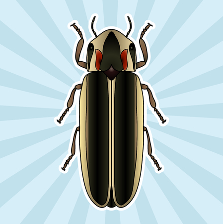 firebug: Insect anatomy. Sticker Firefly beetle Lampyridae. photinus pyralis. Sketch of Firefly beetle.  Firefly beetle Design for coloring book. hand-drawn Firefly beetle. Vector illustration