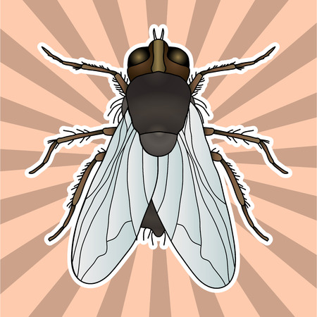 Insect anatomy. Sticker fly. Musca domestica.. Insect. a realistic fly. fly silhouette. fly Design for coloring book. hand-drawn fly. Vector illustration Ilustração