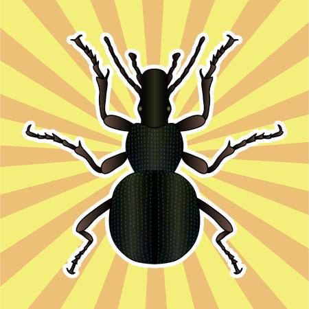 Anatomía de insectos. Etiqueta engomada del insecto escarabajo de tierra. Carabidae coleoptera. Bosquejo de escarabajo de tierra. Escarabajo de tierra Diseño para colorear. Escarabajo de tierra dibujado a mano. Ilustración vectorial Ilustración de vector