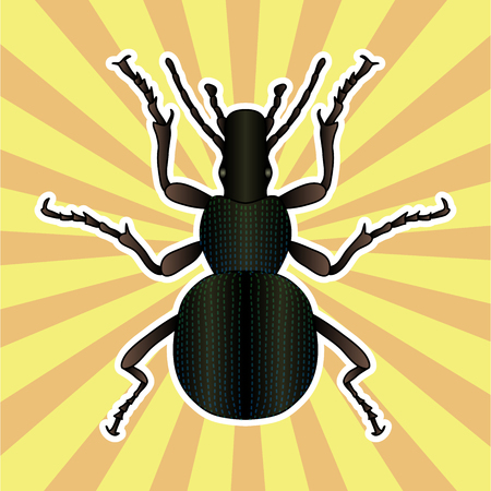 Insect anatomy. Sticker ground beetle bug. Carabidae coleoptera. Sketch of ground beetle. ground beetle Design for coloring book. hand-drawn ground beetle. Vector illustration