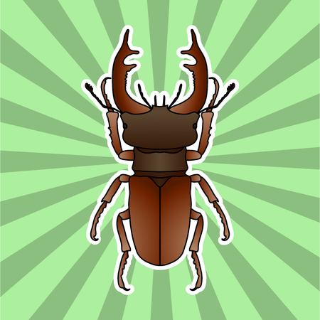 Insect anatomy. Sticker stag-beetle. Lucanus cervus. Sketch of stag-beetle. stag-beetle Design for coloring book. hand-drawn stag-beetle. Vector illustration