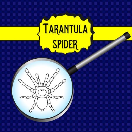 insect in magnifier. Brachypelma smithi, spider female. Sketch of spider. Tarantula Design for coloring book. Vector illustration