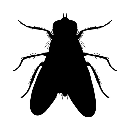 musca domestica: Insect silhouette. Sticker ground beetle bug. Carabidae coleoptera. Illustration