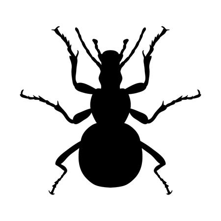 Insekt Silhouette. Aufkleber Boden käfer. Carabidae Coleoptera.
