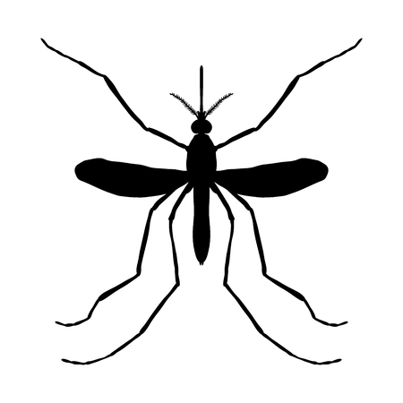 extreme close up: Insect silhouette. Insect. a realistic mosquito. Culex pipiens Mosquito silhouette. Mosquito isolated on white background. hand-drawn mosquito. Illustration