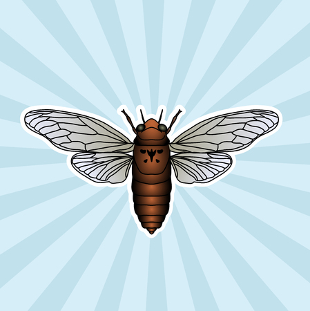 cicada: Insect anatomy. Sticker cicada. Cicadidae. Chremistica umbrosa. Sketch of cicada.  cicada hand-drawn cicada.
