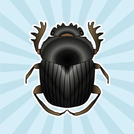 scarab: Insect anatomy. Sticker Geotrupidae dor-beetle . Sketch of dor-beetle. dor-beetle. dor-beetle scarab hand-drawn scarab, dor-beetle.