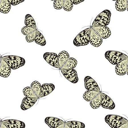paper kite: Seamless pattern with butterfly Idea Leuconoe. Paper Kite .    hand-drawn paperkite butterfly . Vector illustration