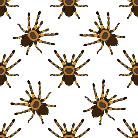 tarantula: Seamless pattern with . tarantula spider Brachypelma smithi hand-drawn tarantula spider Brachypelma smithi. Vector illustration