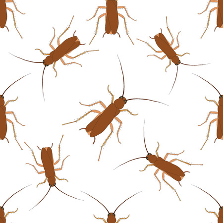 Seamless pattern with cockroach. blattella germanica   hand-drawn cockroach. Vector illustration