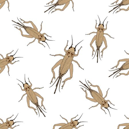 campestris: Seamless pattern with cricket or grig. Gryllus campestris.    hand-drawn cricket. grig. . Vector illustration