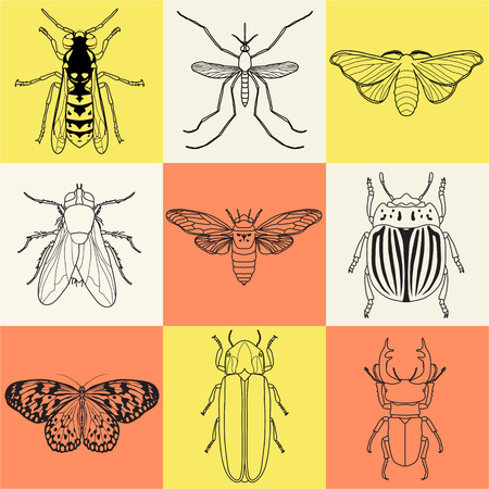 firefly: insect icons set. Cicada and stag beetle, firefly and wasp, fly and paperkite butterfly, colorado beetle and mosquito, illustration