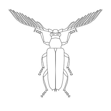 insecta: Sketch of Skalbaggar beetle. Skalbaggar beetle isolated on white background. hand-drawn Skalbaggar beetle.