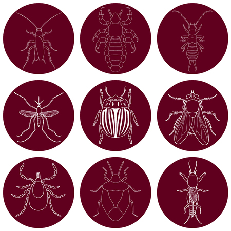 insect icons set. Earwig and tick, stink bug and cricket, fly and louse, colorado beetle and mosquito, illustration