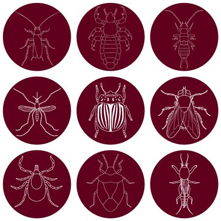 Insekt Icons gesetzt. Ohrwurm und Zecken, Stinkwanze und Cricket, Fliegen und Laus, Kartoffelkäfer und Mücken, illustration