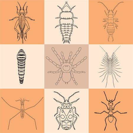 insect icons set. Earwig and trilobite beetle, firebug and cricket, centipede and caterpillar, ant and water strider, vector illustration