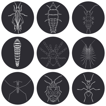 firebug: insect icons set. Earwig and trilobite beetle, firebug and cricket, centipede and caterpillar, ant and water strider, vector illustration
