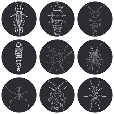 Insekt Icons gesetzt. Earwig und Trilobiten Käfer, Firebug und Cricket, Tausendfüßler und Raupe, Ameise und Wasserläufer, Vektor-Illustration