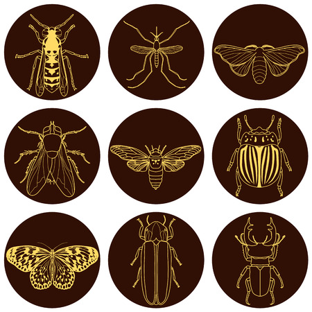 stag beetle: insect icons set. Cicada and stag beetle, firefly and wasp, fly and paperkite butterfly, colorado beetle and mosquito, vector illustration Illustration