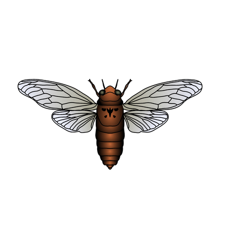 Cicada. Cicadidae. Sketch of cicada. cicada isolated on white background. cicada Design for coloring book. hand-drawn cicada. Vector illustration