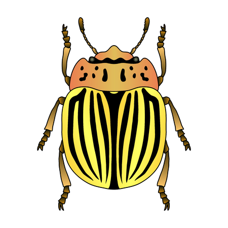 Colorado potato beetle. Leptinotarsa decemlineata. Sketch of colorado potato beetle. colorado beetle isolated. colorado beetle Design for coloring book. hand-drawn colorado beetle. Illustration
