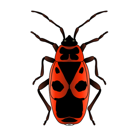 Pyrrhocoris apterus. Käfer. Bug-Soldat. Feuerwanze. Skizze des Käfers. Brandstifter lokalisiert auf weißem Hintergrund. Käfer Design für Malbuch. handgezeichneter Käfer. Vektor-Illustration.