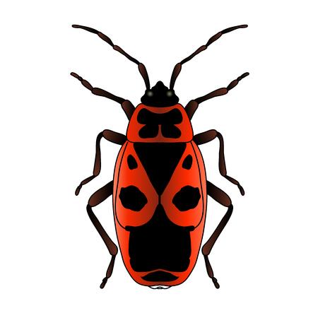 Pyrrhocoris apterus. beetle. Bug-soldier. Firebug. Sketch of beetle. Firebug isolated on white background. beetle Design for coloring book. hand-drawn beetle. Vector illustration.