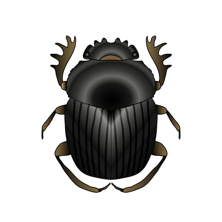 Scarab. Geotrupidae dor-beetle . Sketch of dor-beetle. dor-beetle scarab isolated on white background. dor-beetle scarab Design for coloring book. hand-drawn scarab, dor-beetle.