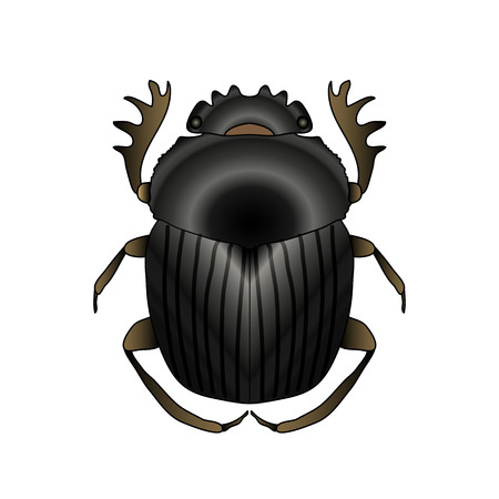 scarab. Geotrupidae dor-beetle . Sketch of dor-beetle. dor-beetle scarab isolated on white background. dor-beetle scarab Design for coloring book. hand-drawn scarab, dor-beetle. Vector illustration Banco de Imagens